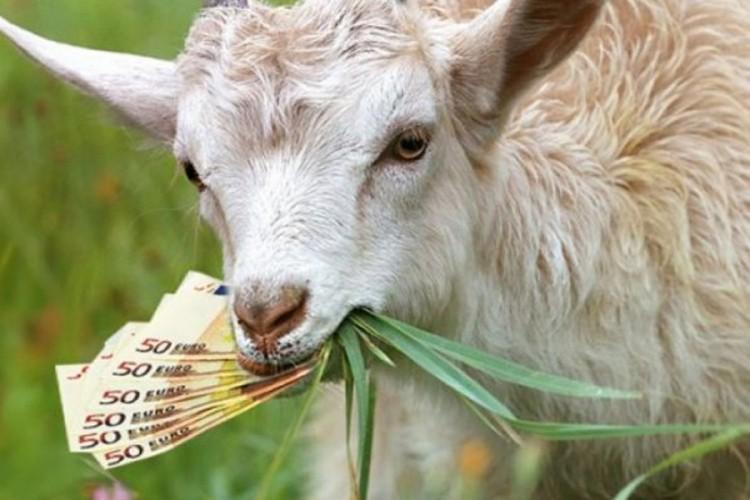 Šta se krije iza vijesti da je Simićima iz Aranđelovca koza pojela 20.000 evra